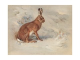 Lepus Europaeus: the Common Hare