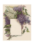 Victorian Illustration of Lilac Border
