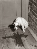 1950s Sad Dog in Corner Ashamed House Training Accident Wooden Floor