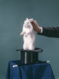 White Rabbit Being Pulled Out of Silk Top Hat by Hand of Magician