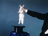 Hand of Magician Pulling White Rabbit Out of Black Silk Top Hat