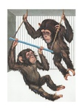 Illustration of Two Chimps Playing