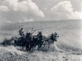 1920s-1930s Horse-Drawn Wheat Harvesting