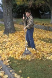 1970s-1980s Teenage Boy Raking Autumn Leaves