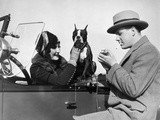 1920s Woman Sitting in Driver's Seat Convertible Car with Boxer Dog Man Lighting Cigarette