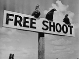 "Grouse on ""Free Shoot"" Sign"