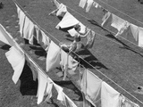 1950s Woman Hanging Laundry Outdoors on Several Clotheslines