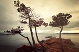 Palombaggia Trees