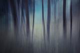 Evening Woods