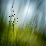 Morning Grass Papier Photo par Ursula Abresch
