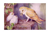 1950s UK Barn Owls Magazine Plate