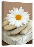 Daisy and Stones Gallery-Wrapped Canvas
