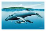New Birth - Hawaiian Humpback Whales (Kohol) - Mother and her Calf