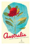 Australia - Red Waratah (Telopea) Flower - New South Wales (NSW) State Emblem