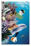 Dolphin's Reef - Gray's Hawaiian Spinner Dolphin (Naia)