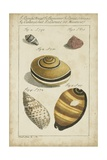 Vintage Shell Study IV Reproduction d'art par Martini