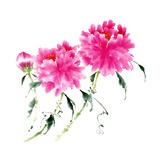 Peonies in Pink III