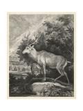 Woodland Deer II