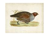 Morris Pheasants I