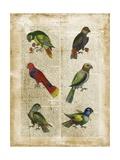 Antiquarian Parrots I