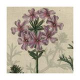 Floral Delight VI