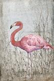 American Flamingo II