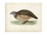 Morris Pheasants III