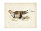 Morris Pheasants V