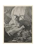 Woodland Deer VIII