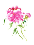 Peonies in Pink I