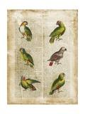 Antiquarian Parrots II