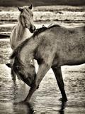 Beach Horses I Papier Photo par David Drost
