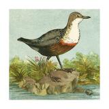 Mini Vintage Birds VII