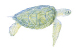 Tranquil Sea Turtle I Reproduction d'art par Megan Meagher