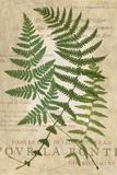 Fern Folio I