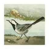 Mini Vintage Birds VI