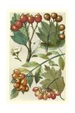 Fruits and Foliage IV