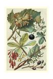 Fruits and Foliage V