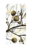 Willow Blooms II