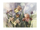 Hadfield Irises V