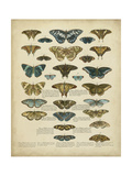 Tabula De Papilio