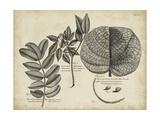 Vintage Folia I