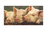 Pig Heaven Reproduction d'art par Carolyne Hawley