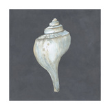 Shell on Slate IV