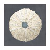 Shell on Slate VII Reproduction d'art par Megan Meagher