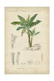 Tropical Botanique III