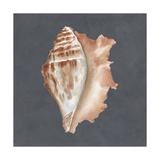 Shell on Slate IX