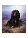 A Spaniel in the Highlands
