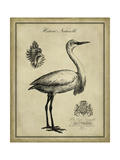 Antiquarian Egret