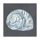 Shell on Slate VIII